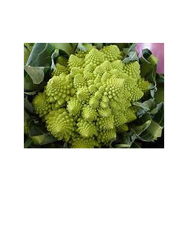Broccoflower Certified Organic Each