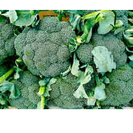 Broccoli Certified Organic Each