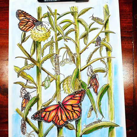 Butterfly Hunt Greeting Card