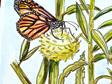 Butterfly Hunt Prints
