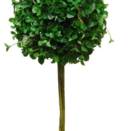 Button Ivy Standard Topiary 1222