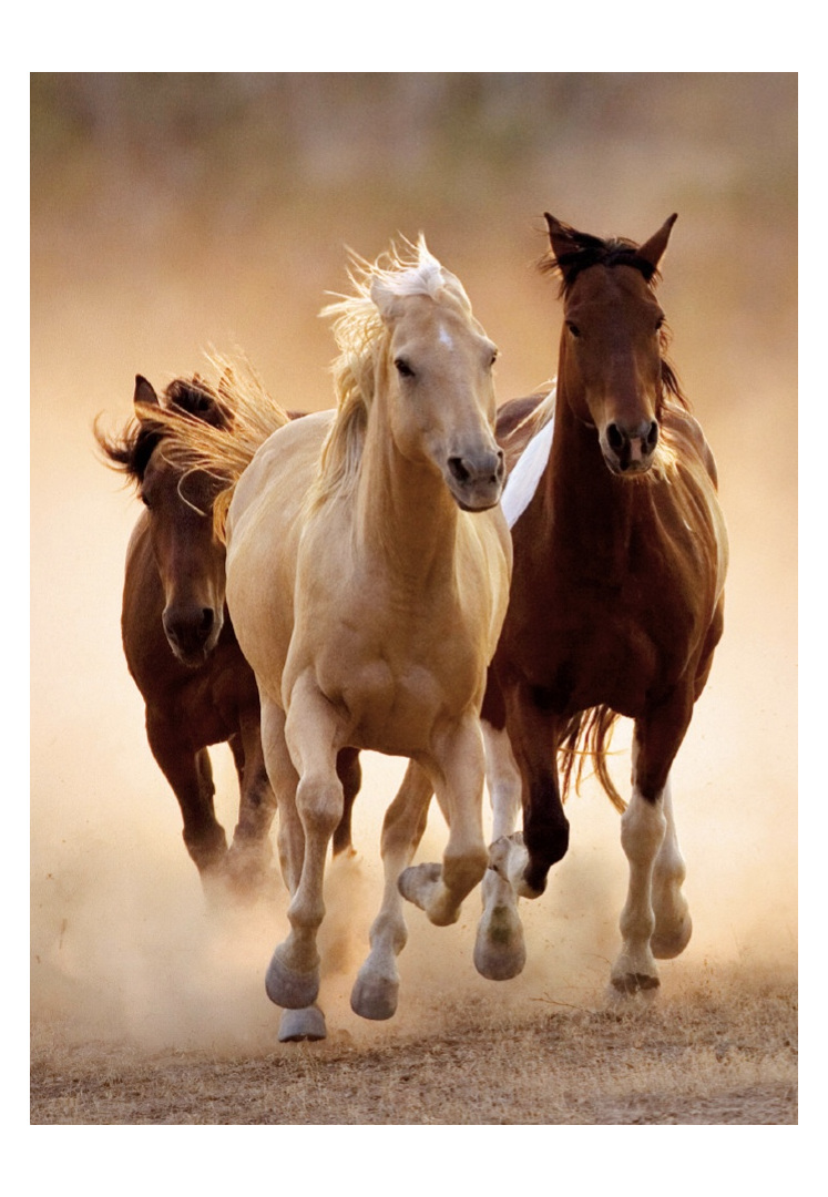 buy Clementoni  1000 piece jigsaw puzzle Running Horses  at www.puzzlesnz.co.nz