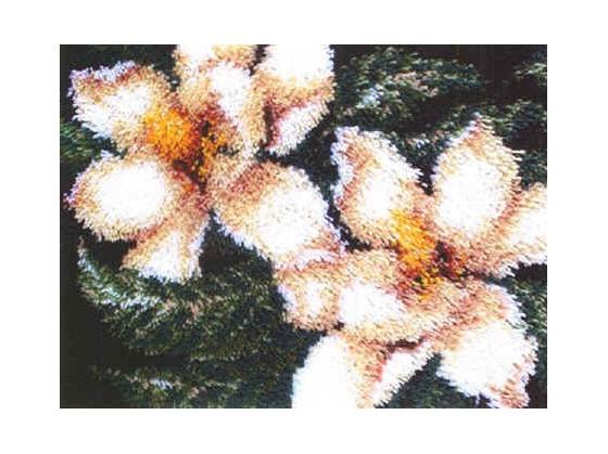 CA4502   Magnolia