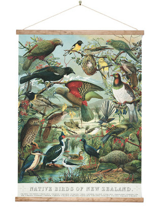 Canvas Native Birds of NZ