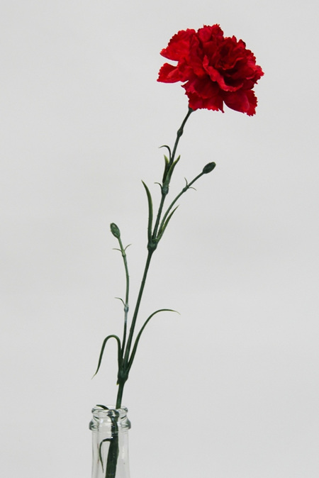 Carnation Standard  Red 4402