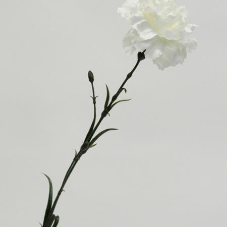 Carnation Standard  White 4403