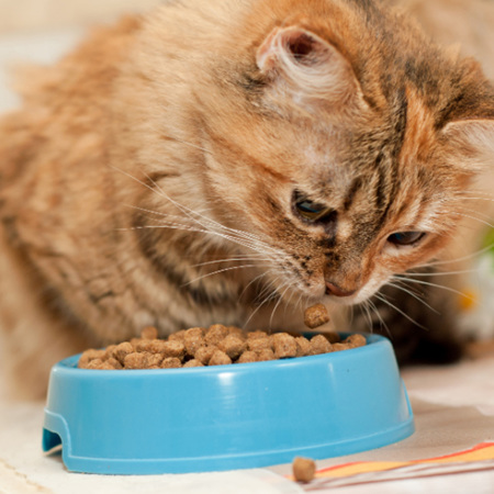 Cat Food (Dry & Canned)