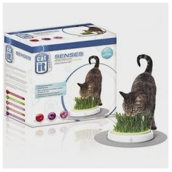 Cat It Senses - Grass Garden Kit