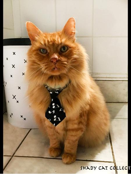 Cat Music Notes Tie