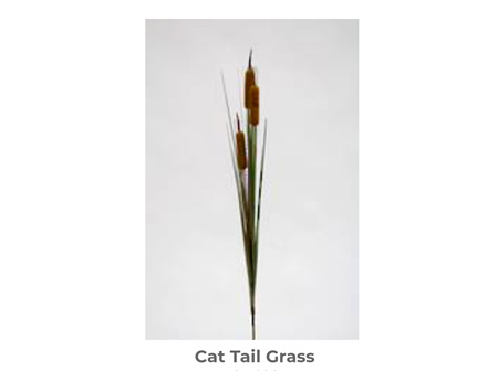 Cat Tail Grass 85cm