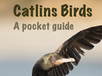Catlins Birds - A Pocket Guide
