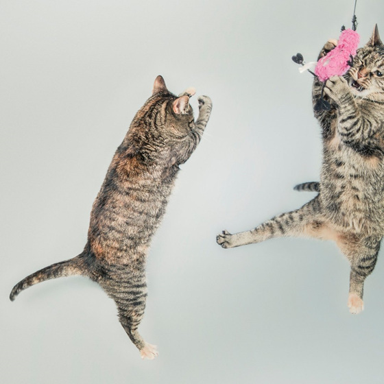 Cats spring into Spring the silly season for feline friends