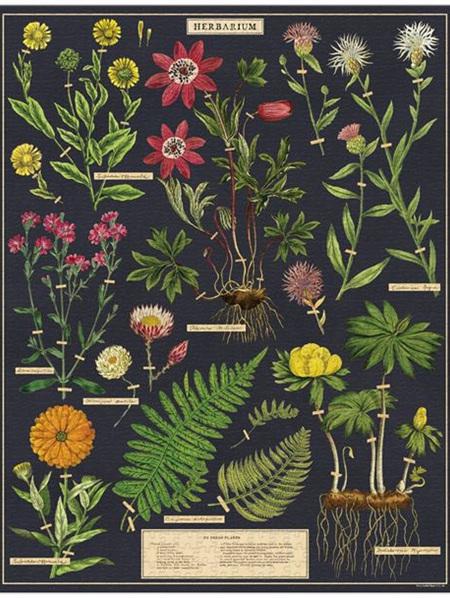 Cavallini 1000 Piece Puzzle - Herbarium