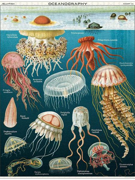 Cavallini 1000 Piece Puzzle - Jellyfish