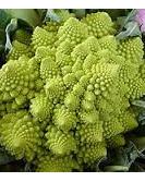 Certified Organic Broccoflower - 1 head