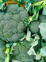 Certified Organic Broccoli - 1 head