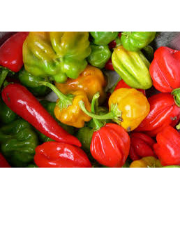 Certified Organic Chillies(Habanero) - 100g approx