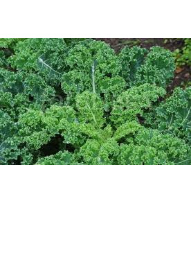 Certified Organic Curly Kale - approx. 200g