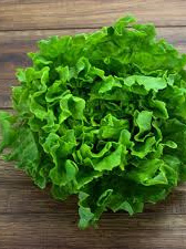 Certified Organic Lettuces (Green Frilly Batavia) - 1 head
