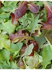Certified Organic Mesclun Salad Lettuce Mix - 100g
