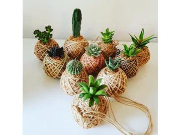 CF Mini Succulent & Cactus Kokedama
