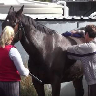 Clipping for First Time or Dangerous Horse