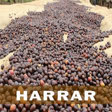 Coffee Sundried Ethiopian Harrer Organic Whole Beans Approx 100g