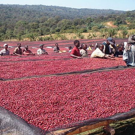 Coffee Sundried Ethiopian Sidamo Organic Whole Beans Approx 100g