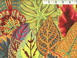 Coleus Moss 144