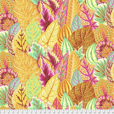 Coleus Yellow PWPJ030104