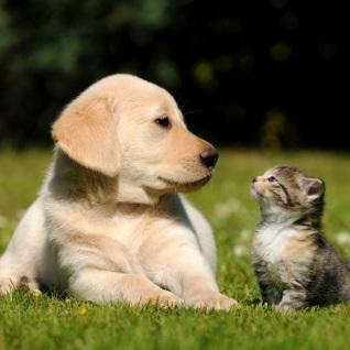 Companion Animal Services