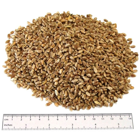 Couplands Poultry Wheat