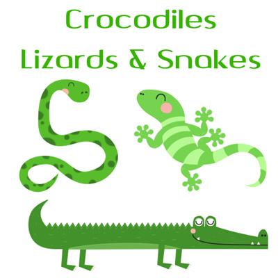 Crocodiles, Lizards & Snakes