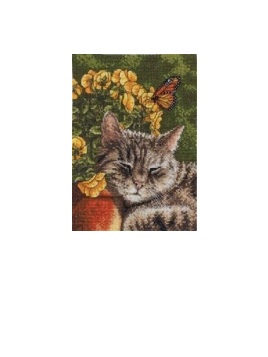Cross Stitch & Embrodiery