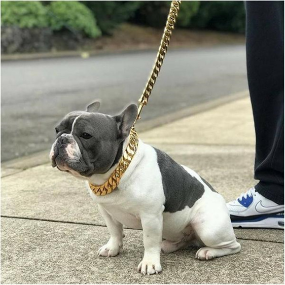 Cuban Large Cuban Link Gold Dog Collar and Leash by Big Dog Chains