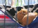 Cuddle Corner Hammocks