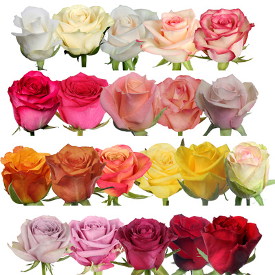 Cut Roses and Spray Roses