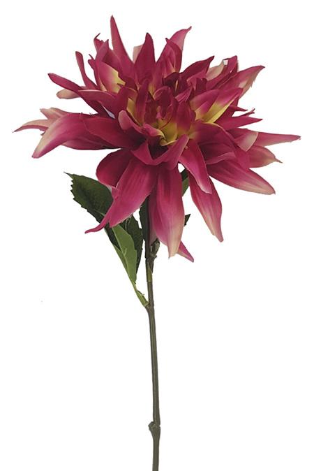 Dahlia Cactus Hot Pink 4321
