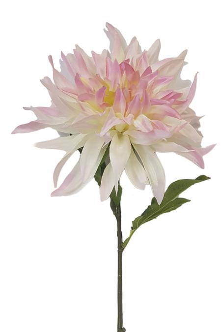 Dahlia Cactus Light Pink 4458