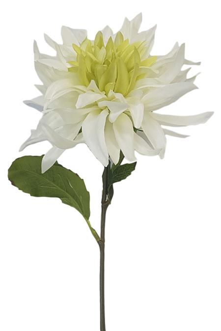 Dahlia Cactus White Green 4320