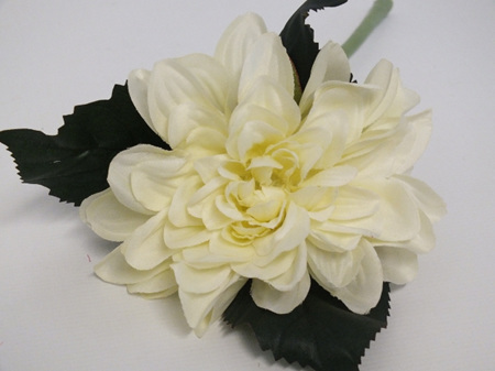 Dahlia cut stem cream 4334