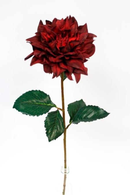 Dahlia Madrid Dark red 4543