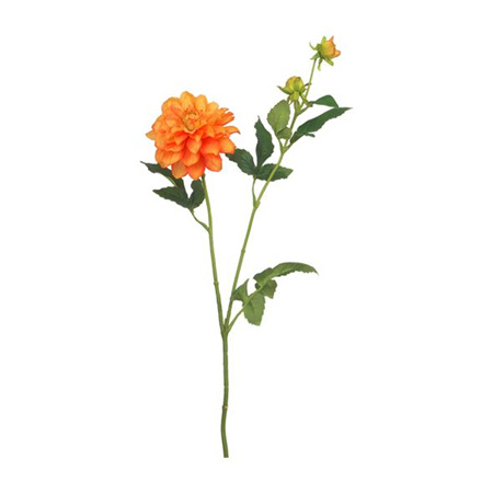 Dahlia Orange garden spray 4571