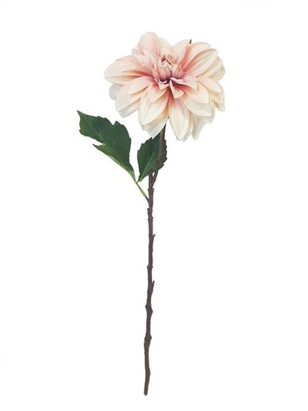 Dahlia Peach 4318