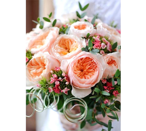 David Austin Cut Roses grown by Van Lier Nurseries
