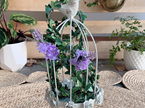Decorative Metal Bird Cages Center piece - Ivory