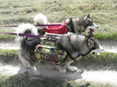 Dog Back Pack