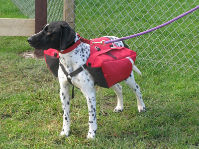 Dog Back Pack