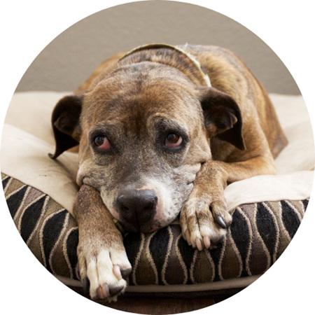 Dog Bedding & Housing