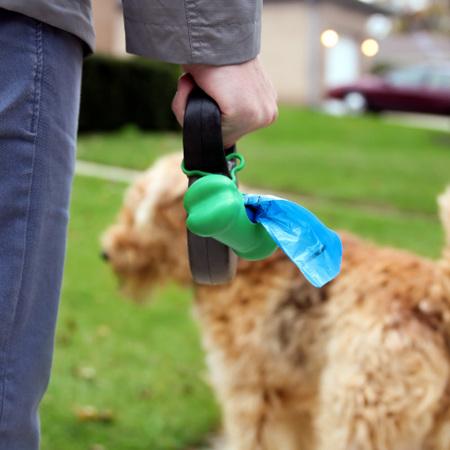 Dog Cleaning & Training